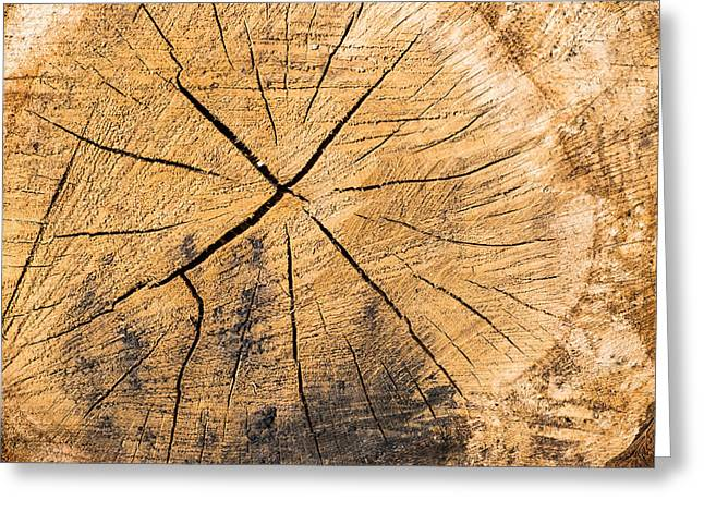 Warm Tones Greeting Cards - Wood - cut surface of a tree log Greeting Card by Matthias Hauser