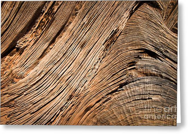 Dead Tree Trunk Greeting Cards - Wood Greeting Card by Delphimages Photo Creations