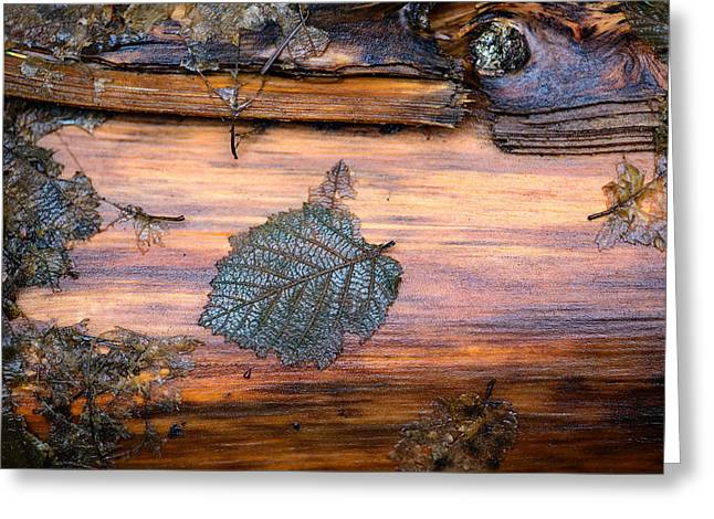 Nature Photographers Greeting Cards - Wood Detail Greeting Card by Laria Saunders