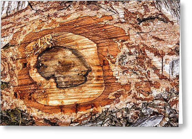 Wood Detail Greeting Card by Matthias Hauser