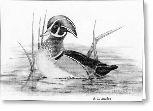 Graphite Greeting Cards - Wood Duck in Pond Greeting Card by Sarah Batalka