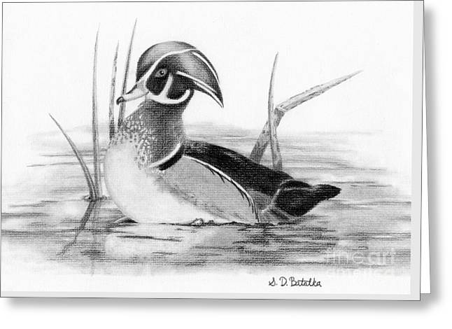 Wood Duck In Pond Greeting Card by Sarah Batalka