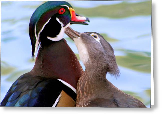 Couple Pyrography Greeting Cards - Wood Duck Love Greeting Card by Bob and Jan Shriner