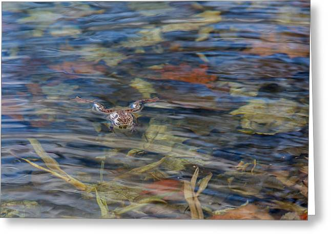 Frogs Photographs Greeting Cards - Wood Frog Greeting Card by Bill  Wakeley