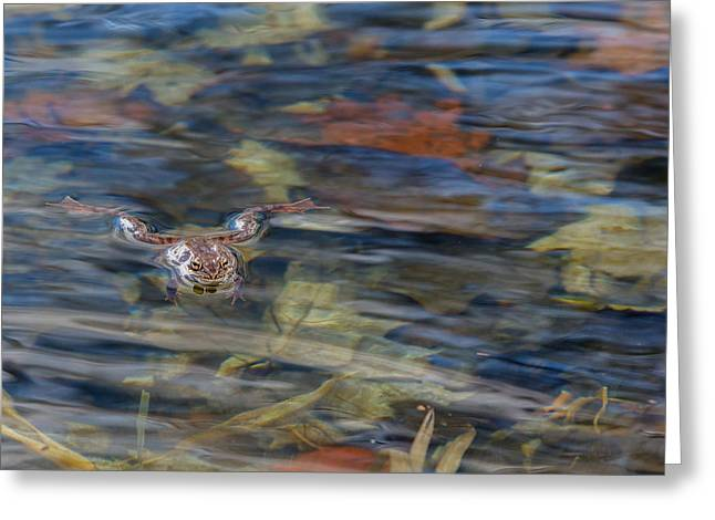 Wood Frog Square Greeting Card by Bill Wakeley