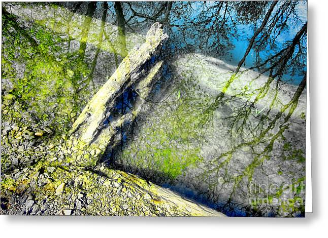 Wood Reflections Greeting Card by Olivier Le Queinec