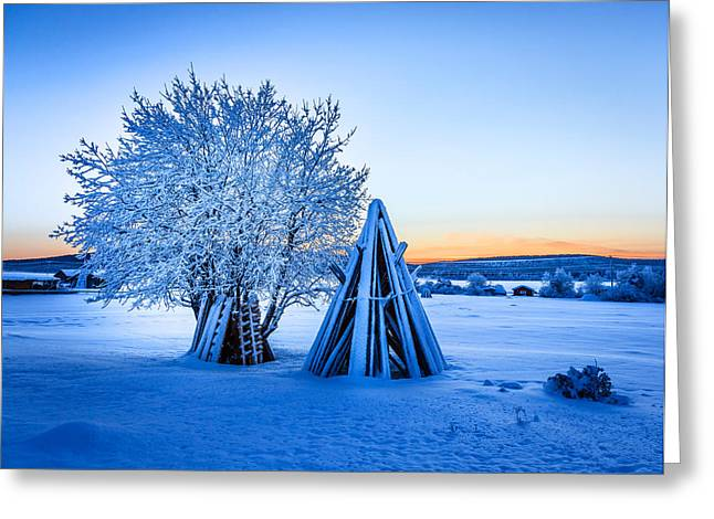 World Locations Greeting Cards - Wood Stacked And A Snow Covered Tree Greeting Card by Panoramic Images