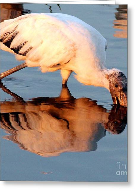 Spooning Greeting Cards - Wood Stork Spooning for Dinner Greeting Card by Keith Lundquist
