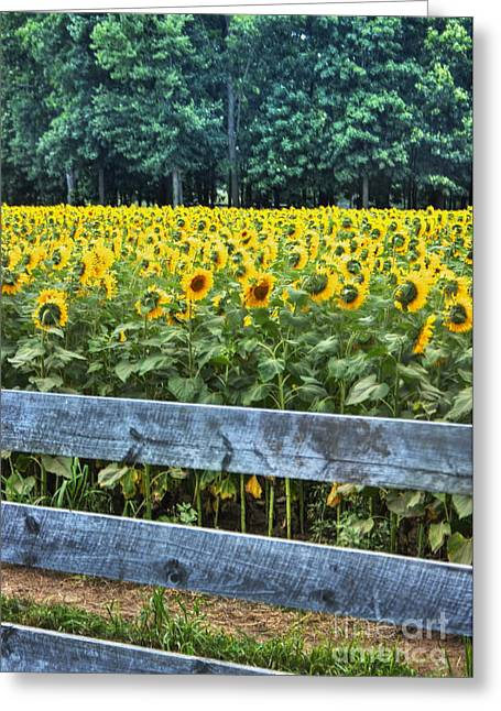 Griswold Connecticut Greeting Cards - Wood Sunflower Fence Greeting Card by Marcel  J Goetz  Sr