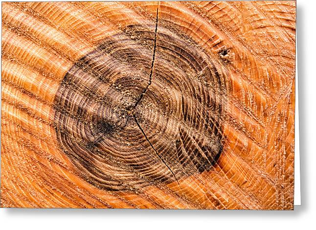 Warm Tones Greeting Cards - Wood surface with annual rings Greeting Card by Matthias Hauser