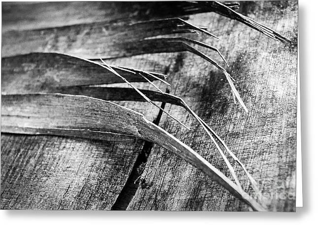 Fraying Greeting Cards - Wood Whispers Greeting Card by Dean Harte