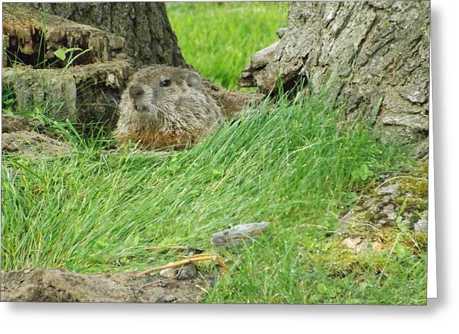 Groundhog Digital Greeting Cards - Woodchuck 2 Greeting Card by Dennis Pintoski