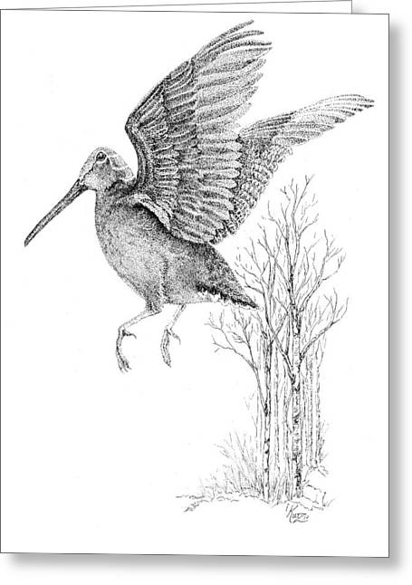 Woodcock Greeting Cards - Woodcock in Flight Greeting Card by Carol Kutz