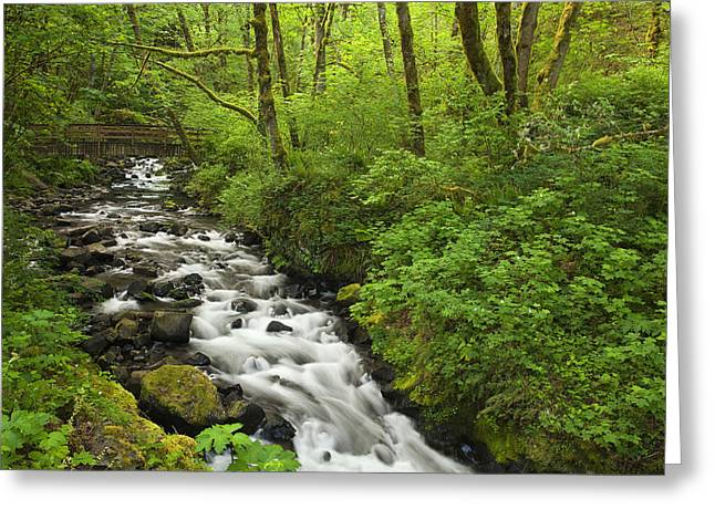Vibrant Green Greeting Cards - Wooded Stream in the Spring Greeting Card by Andrew Soundarajan