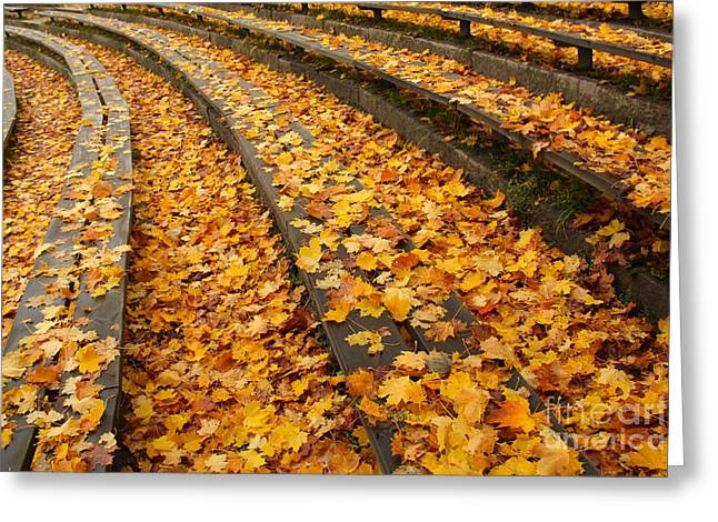 Outdoor Theater Greeting Cards - Wooden benches covered by autumn leaves Greeting Card by Kerstin Ivarsson