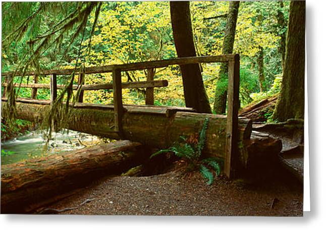 Wooden Bridge In The Hoh Rainforest Greeting Card by Panoramic Images