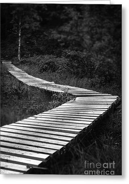 Mangrove Forest Greeting Cards - Wooden bridge Greeting Card by Kenneth Moelgaard