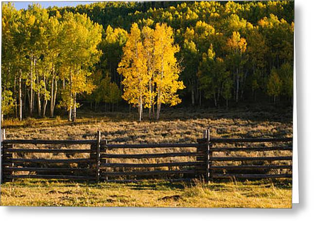 Fall Grass Greeting Cards - Wooden Fence And Aspen Trees Greeting Card by Panoramic Images