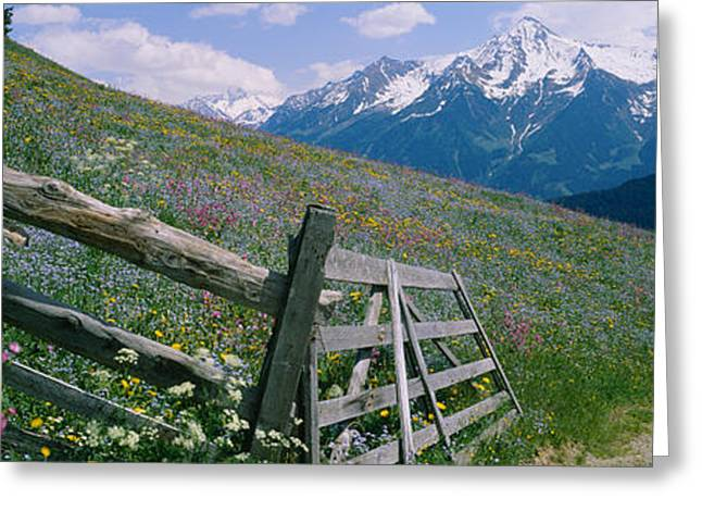 Snow Blossom Greeting Cards - Wooden Fence In A Field, Tirol, Austria Greeting Card by Panoramic Images