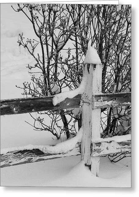 Snow Drifts Greeting Cards - Wooden Fence in Snow Greeting Card by Angie Vogel