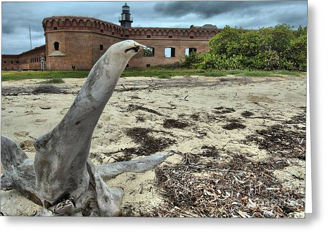 Dry Tortugas Greeting Cards - Wooden Seal Greeting Card by Adam Jewell