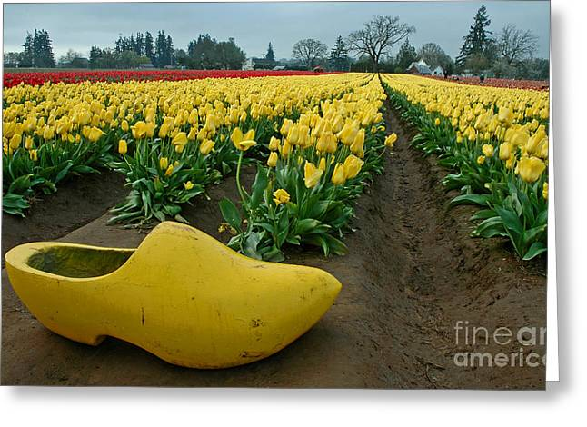 Pacificnorthwest Greeting Cards - Wooden Shoe Tulip Fields Greeting Card by Nick  Boren