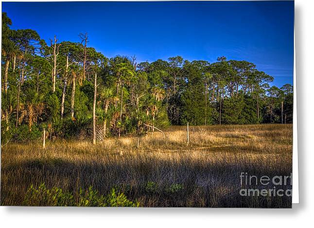 Palmettos Greeting Cards - Woodland and Marsh Greeting Card by Marvin Spates
