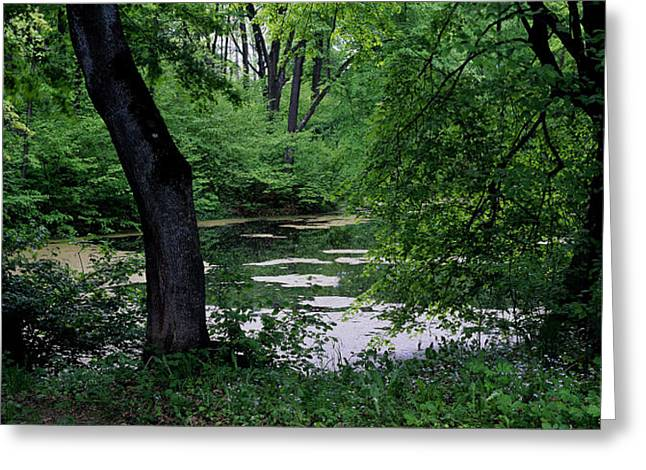 Landscape Photograph Greeting Cards - Woodland Greeting Card by Anonymous