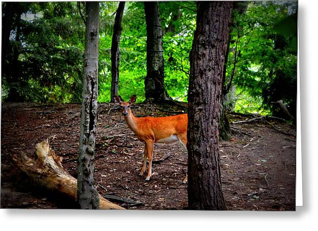 Yearling Greeting Cards - Woodland Deer Greeting Card by Michelle Calkins