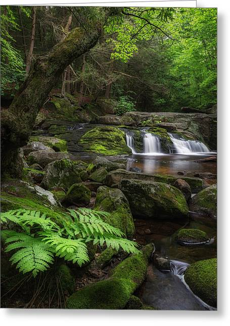 Morning Greeting Cards - Woodland Falls Greeting Card by Bill  Wakeley
