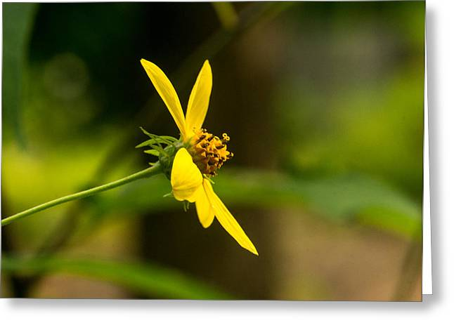 Tendrils Greeting Cards - Woodland Flower with Curlicue on Top 2 Greeting Card by Douglas Barnett