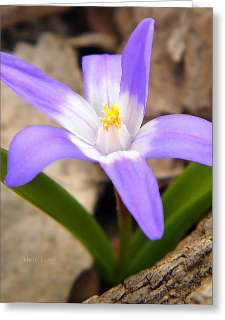 Photograph Of Artist Greeting Cards - Woodland Gem Greeting Card by Chris Berry