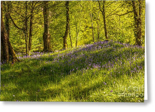 Dappled Light Greeting Cards - Woodland Of Bluebells Greeting Card by Amanda And Christopher Elwell