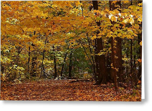 Oregon Illinois Greeting Cards - Woodland Path Greeting Card by Bruce Bley
