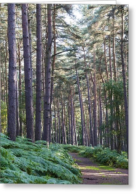 Milton Keynes Greeting Cards - Woodland path Greeting Card by David Isaacson