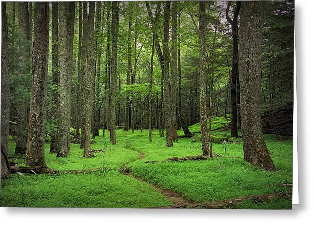 Randy Greeting Cards - Woodland Path in Cades Cove Greeting Card by Randall Nyhof