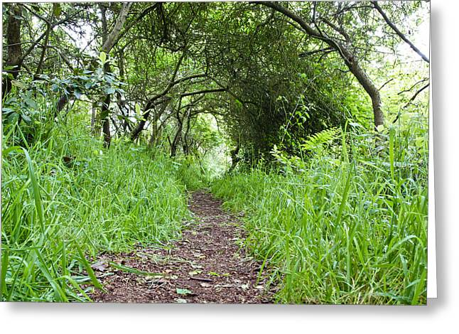 Ambition Photographs Greeting Cards - Woodland pathway Greeting Card by Tom Gowanlock