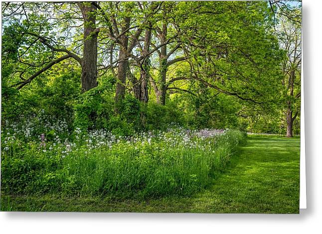 Woodland Phlox   Greeting Card by Steve Harrington