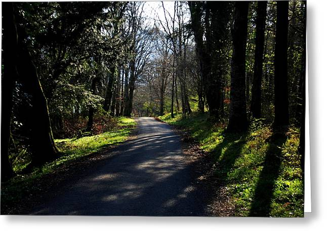 Aidan Moran Photography Greeting Cards - Woodland Shadows Greeting Card by Aidan Moran