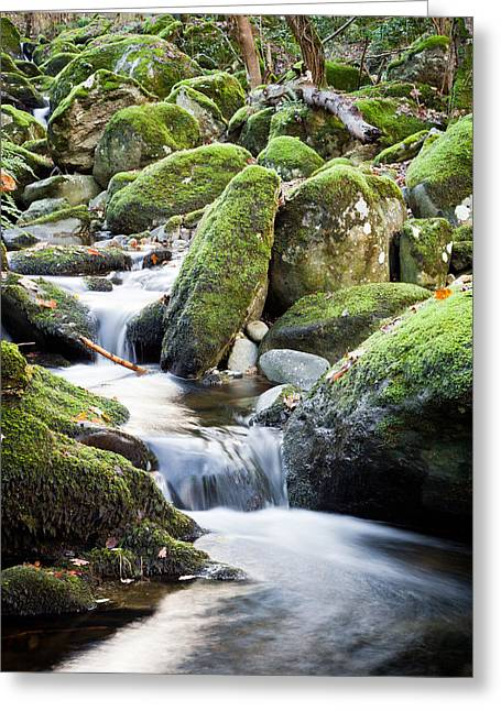 Stone Steps Greeting Cards - Woodland Stream Greeting Card by Christine Smart