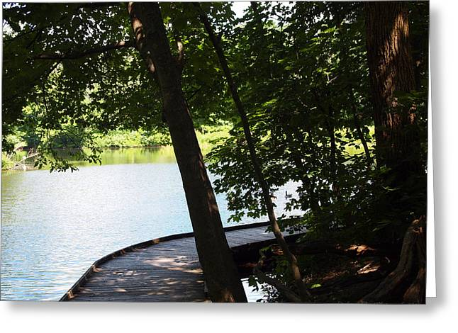 Nature Center Pond Greeting Cards - Woodland Summer Walk Greeting Card by Deborah Fay
