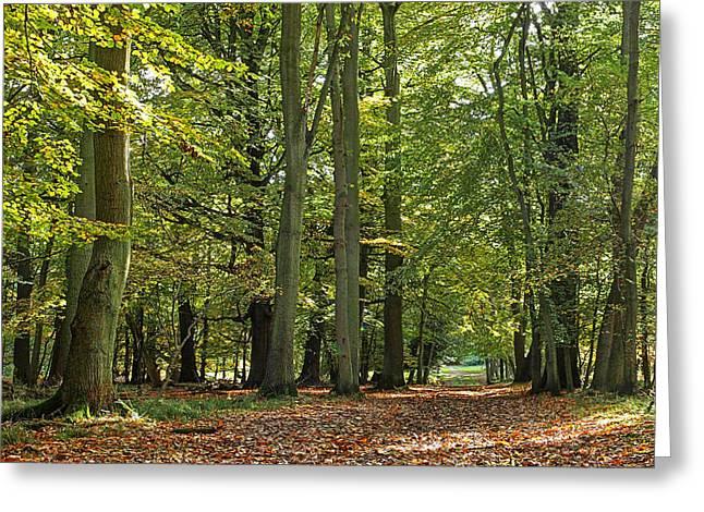 Woodland Scenes Greeting Cards - Woodland Walk 3 Greeting Card by Gill Billington