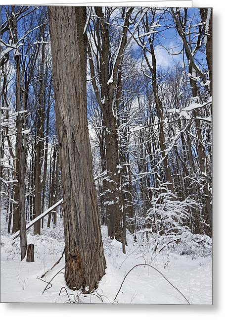 Snow-covered Landscape Greeting Cards - Woodland Winter 2 Greeting Card by Susan  Degginger