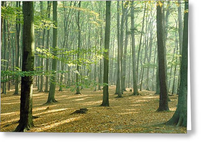 Forest Floor Photographs Greeting Cards - Woodlands Near Annweiler Germany Greeting Card by Panoramic Images