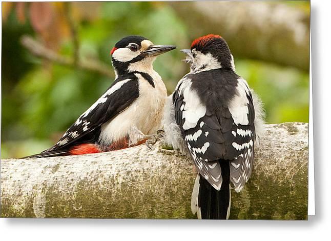 Walnut Tree Photograph Greeting Cards - Woodpecker family Greeting Card by Izzy Standbridge