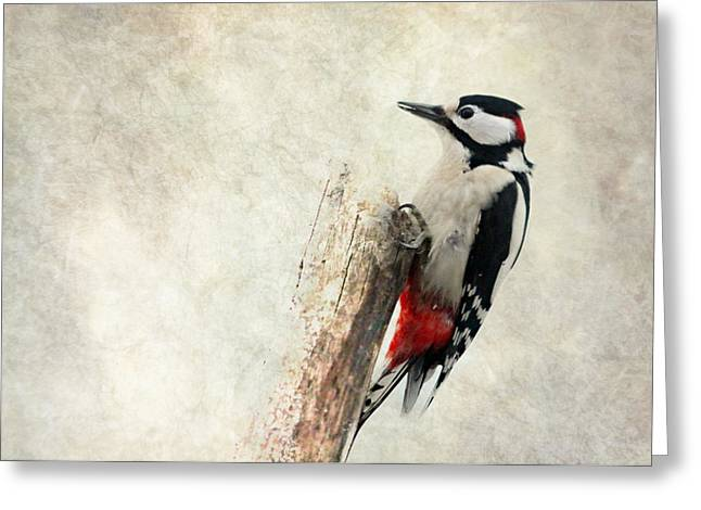 Feeding Mixed Media Greeting Cards - Woodpecker In Nature Greeting Card by Heike Hultsch