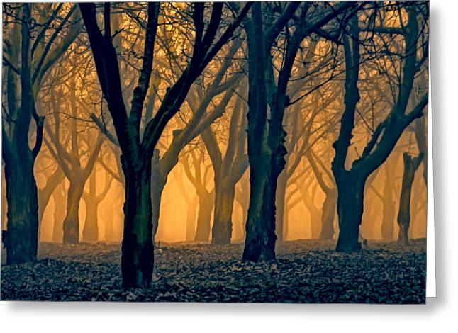 Pastureland Greeting Cards - Woods Aglow Greeting Card by Don Schwartz