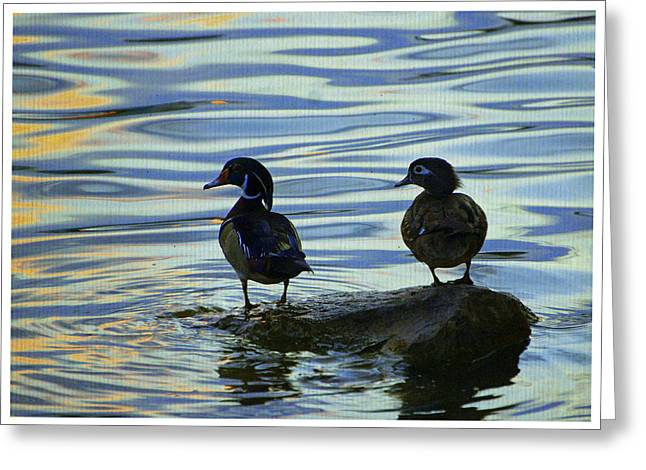 Water Fowl Greeting Cards - Woods Ducks at Sunset Greeting Card by Laurie Perry