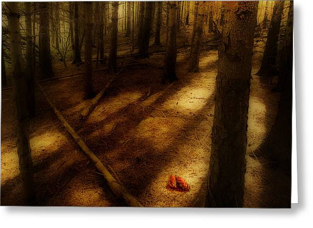 woods with pine cones Greeting Card by Meirion Matthias