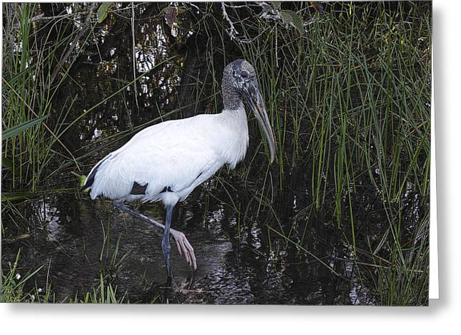 Zoology Greeting Cards - Woodstork Greeting Card by Rudy Umans